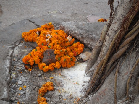 Flowers are used all over India for both decoration and worship. Mari- golds are popular because of their rich orange hue, given the saffron color is sacred in Hinduism. These flowers were left at the base of a tree outside a Hindu temple.