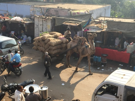 Chaos is unavoidable in the overcrowded and often dirty streets of both large cities and small towns. Camel and horse- drawn carts plod along while the cars, trucks, and tuktuks zoom by bicycles, cows, and pedestrians, who often have no other choice than to walk in the road.