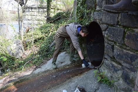 Harris takes water samples at the Jones Falls.