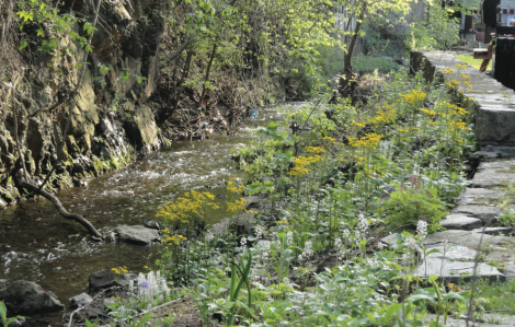Streambank native garden, two years after planting. Photo by Jeff La Noue